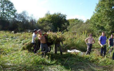 Opération «Solidage» au marais du Vieux Marigny